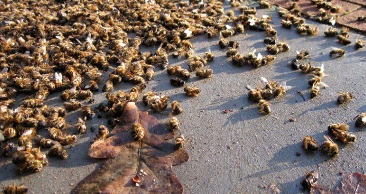 пчелите изчезват пестициди