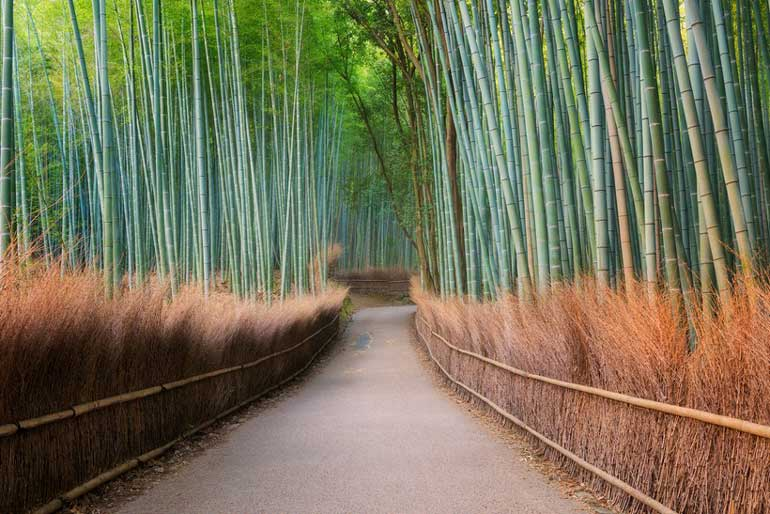 бамбукова гора Арашияма