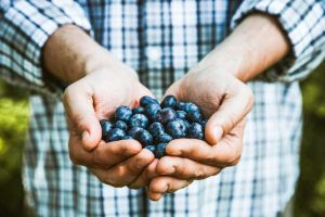 най-добрите суперхрани - боровинки