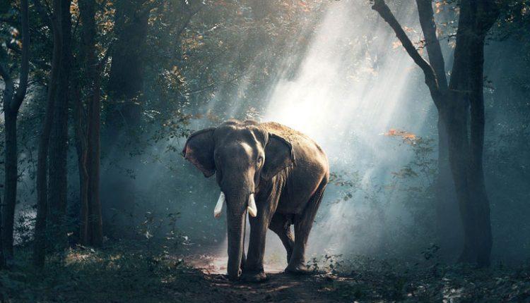 Човечеството е заличило 83% от всички диви бозайници