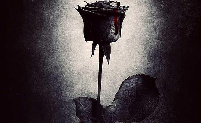 свети валентин роза