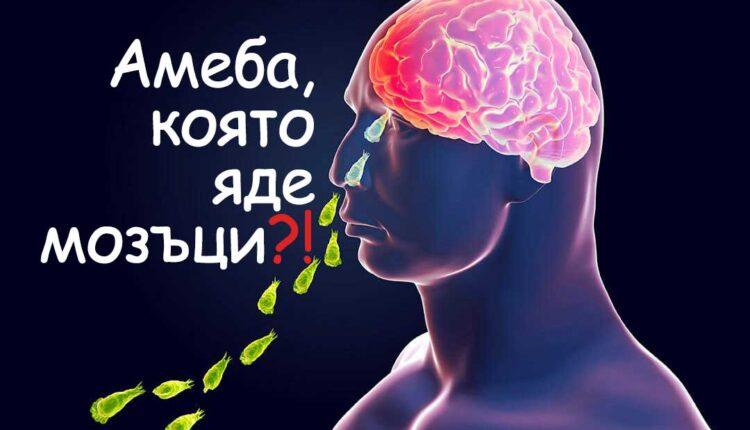 амеба която яде мозъци