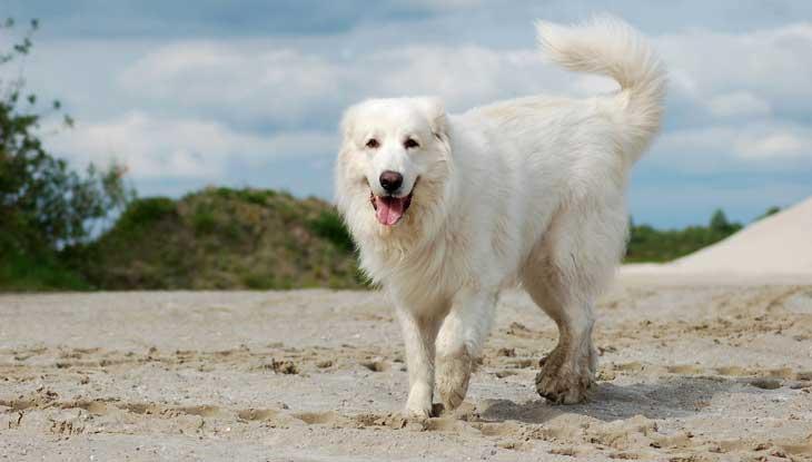 най голямото куче в света