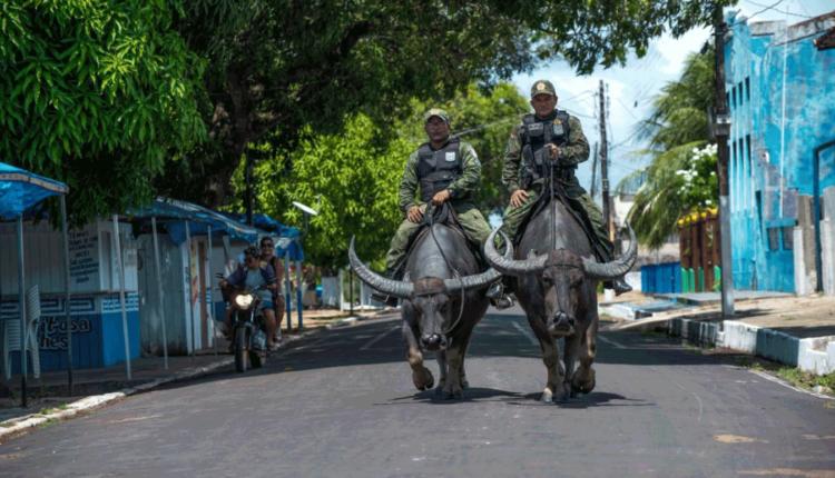 биволи полиция бразилия
