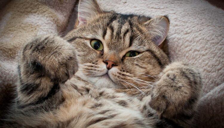 най-умните котки в Света